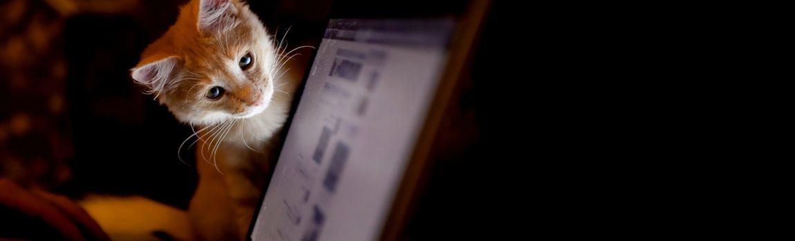 E teve aquela oficina sobre CAT Tools na USP de São Carlos…